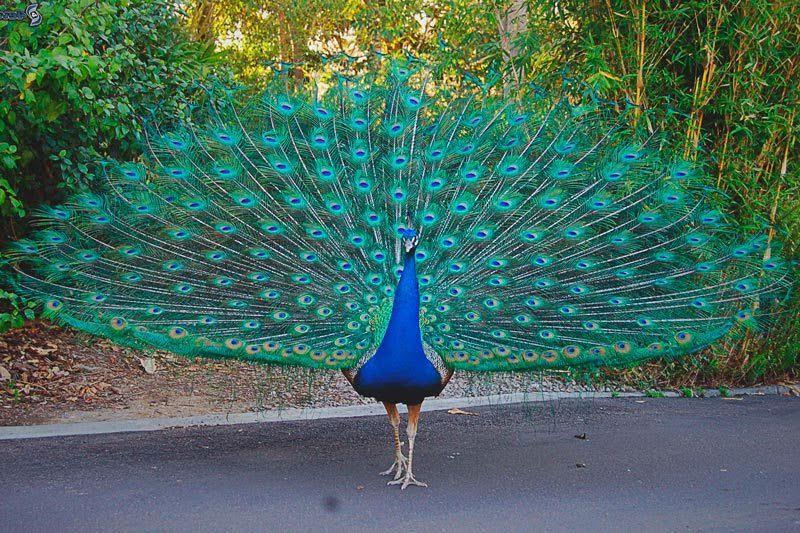 Mundo inmobiliario archivos edn escuela de negocios - Fotos de un pavo real ...